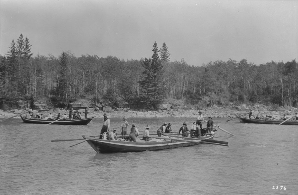 Black and white photograph of three York boats on the Saskatchewan River filled with groups of men who sit, stand, and operate the oars. A riverbank lined with dense trees is in the background.