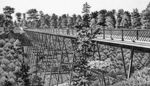 Black and white illustration of a wooden bridge surrounded by trees