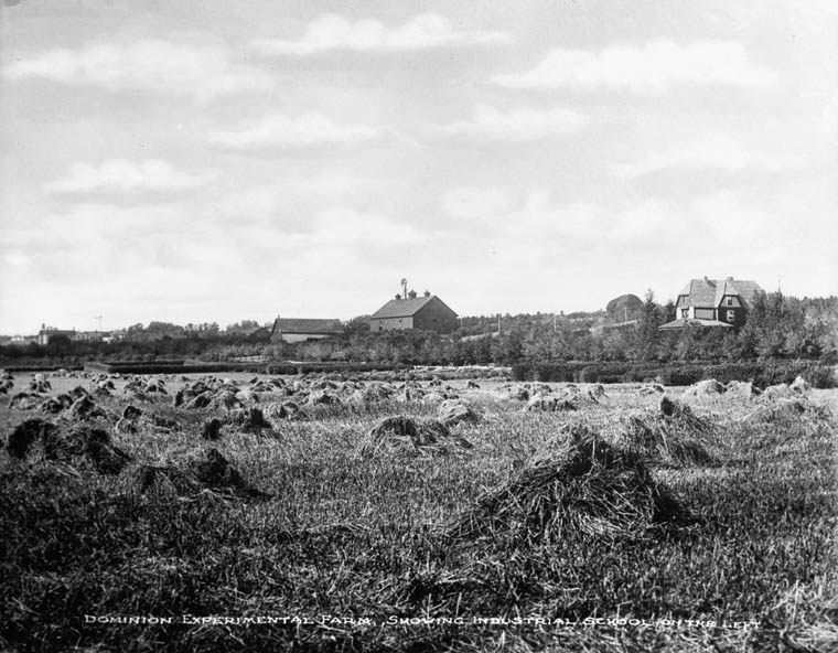 Brandon Indian Residential School, view of the Dominion Experimental Farm showing the school in the distance, ca. 1900−1925