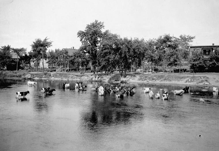 Rideau River at Hurdman's Bridge and Cattle, Ottawa, [Ont.]. (item 1)