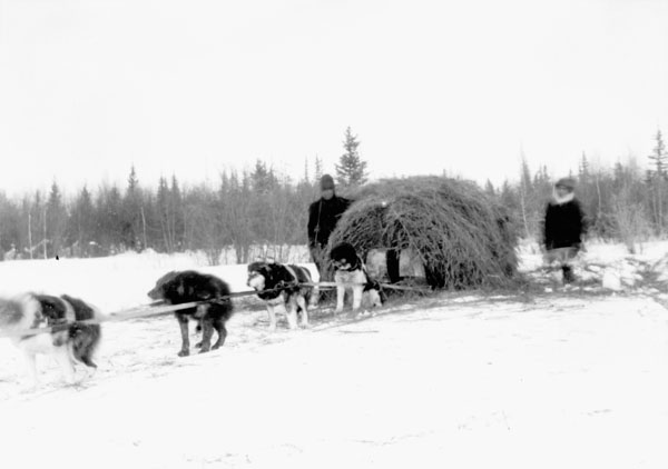 Fort Resolution Indian Residential School (St. Joseph's Convent), dog team transporting a load of hay in the snow, date unknown