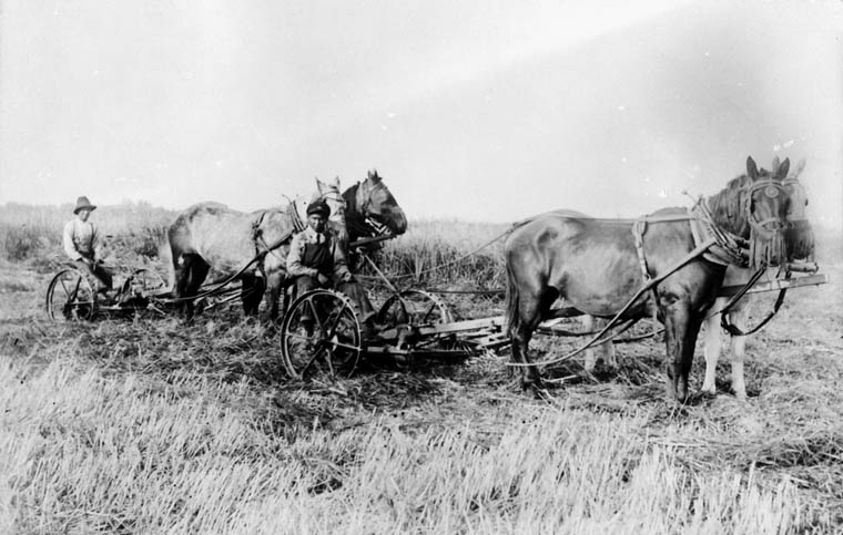 St. Michael's Indian Residential School, two boys cutting hay with two teams of horses, Duck Lake, unknown date