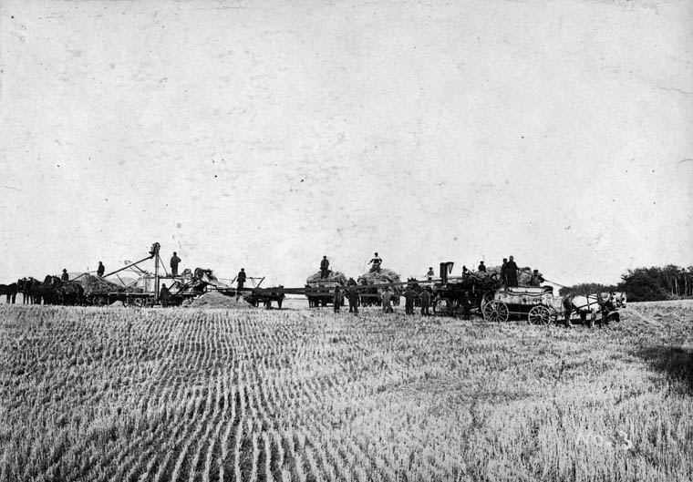 Prokop Kindrachuk threshing on his farm. (item 1)