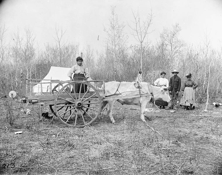Black and white photograph of a woman sitting in a two-wheeled cart pulled by an ox, while a man stands with two women in front of a treeline near a tent in the background.
