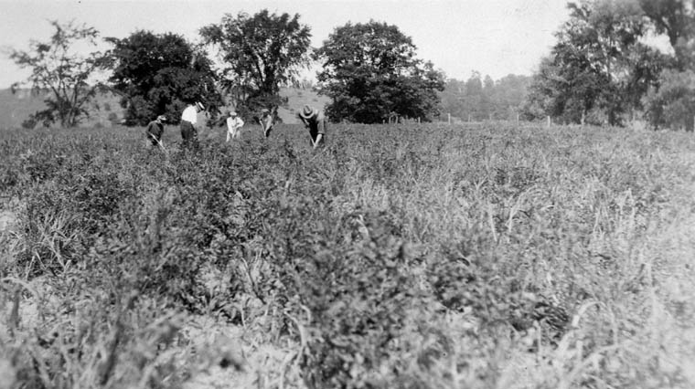 Canadian Jewish Farm School, Georgetown, Ontario. 1929. (item 1)