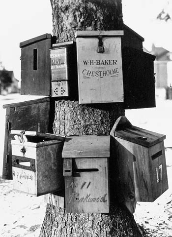 Historic photo from 1908 - Rural mail boxes on a tree - Parkwood Ave. and St. Clair Ave. in Forest Hill