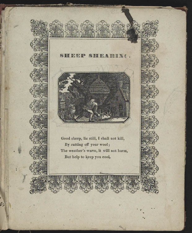 Cover:  Sheep Shearing