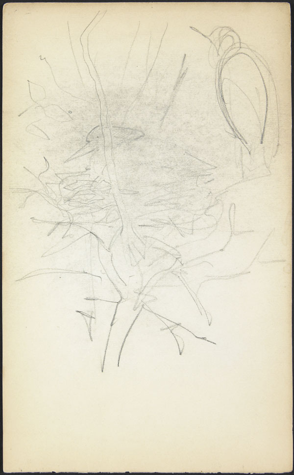 Rough sketch of birds and nest in a tree, London Zoo