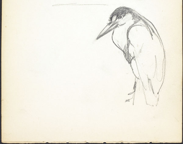 Sketch of a solitary bird, London Zoo