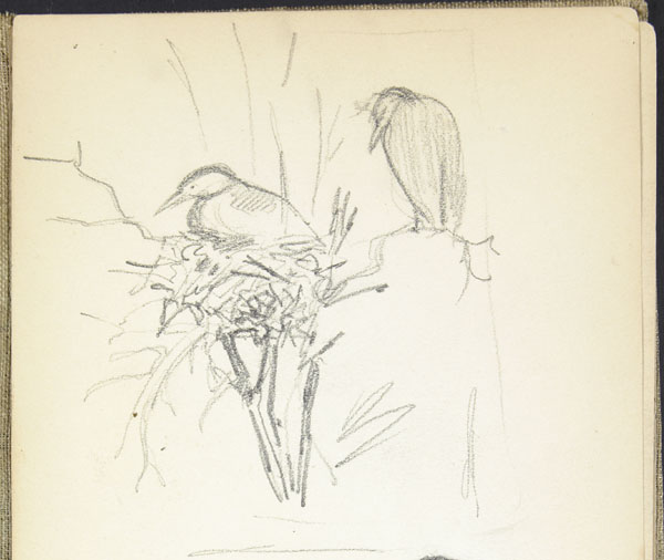 Sketch of birds in a nest, London Zoo