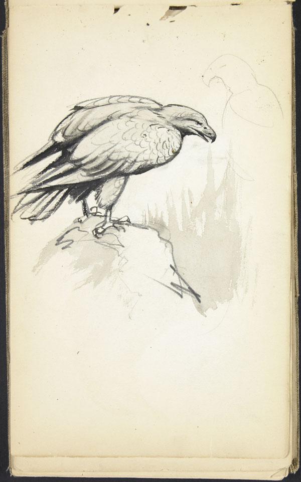 Eagle, London Zoo