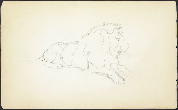 Rough sketch of a lion lying down at London Zoo