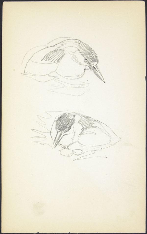 Croquis d'un oiseau, zoo de Londres