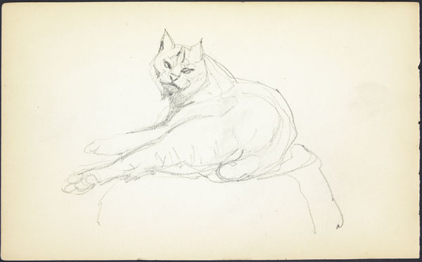 Rough sketch of a cougar lying down, London Zoo