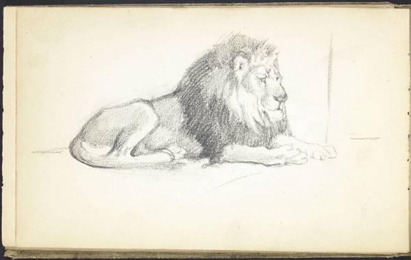 Lion couché, zoo de Londres