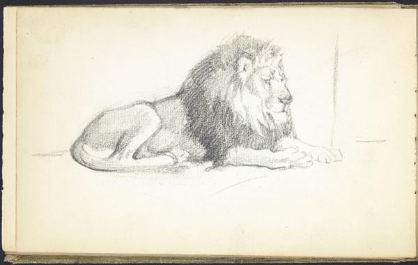 Lion lying down, London Zoo