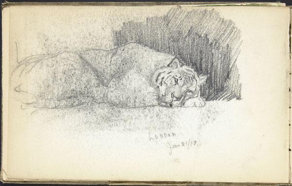Tigre endormi, zoo de Londres