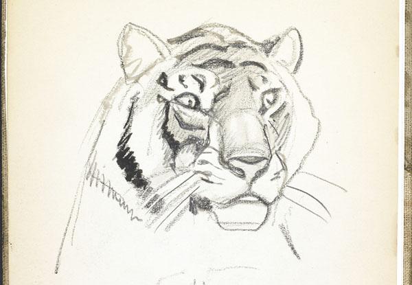 Tête de lion, zoo de Londres