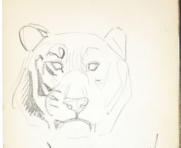 Rough sketch of lion's head, London Zoo