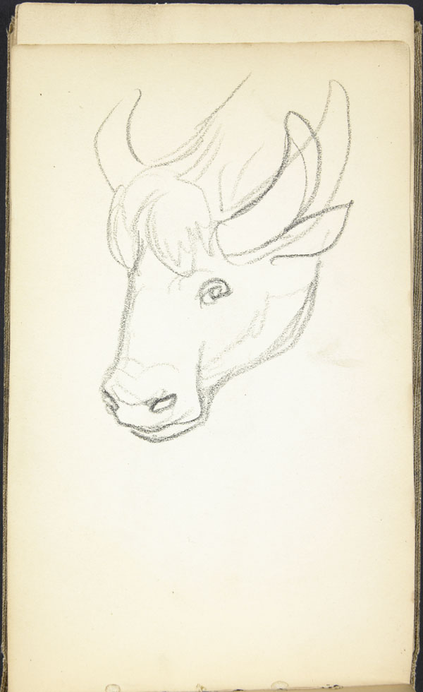 Sketch of a cow's head, Somme