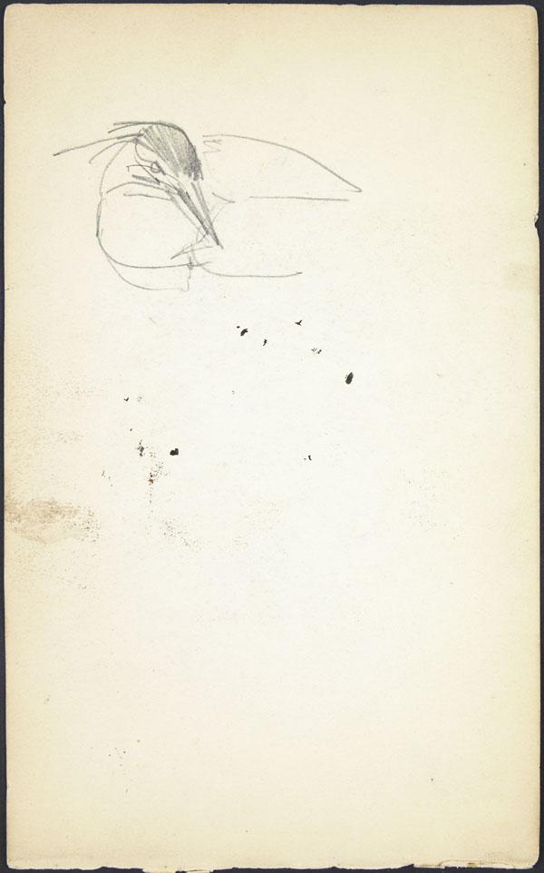 Rough sketch of bird