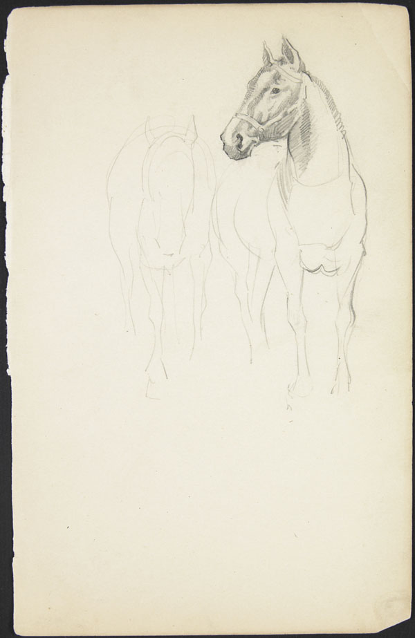 Outline sketch of two horses