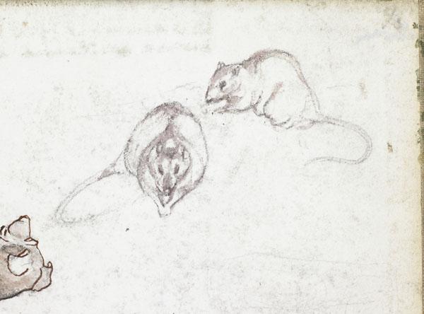 Chien brun et rats (détail des rats)