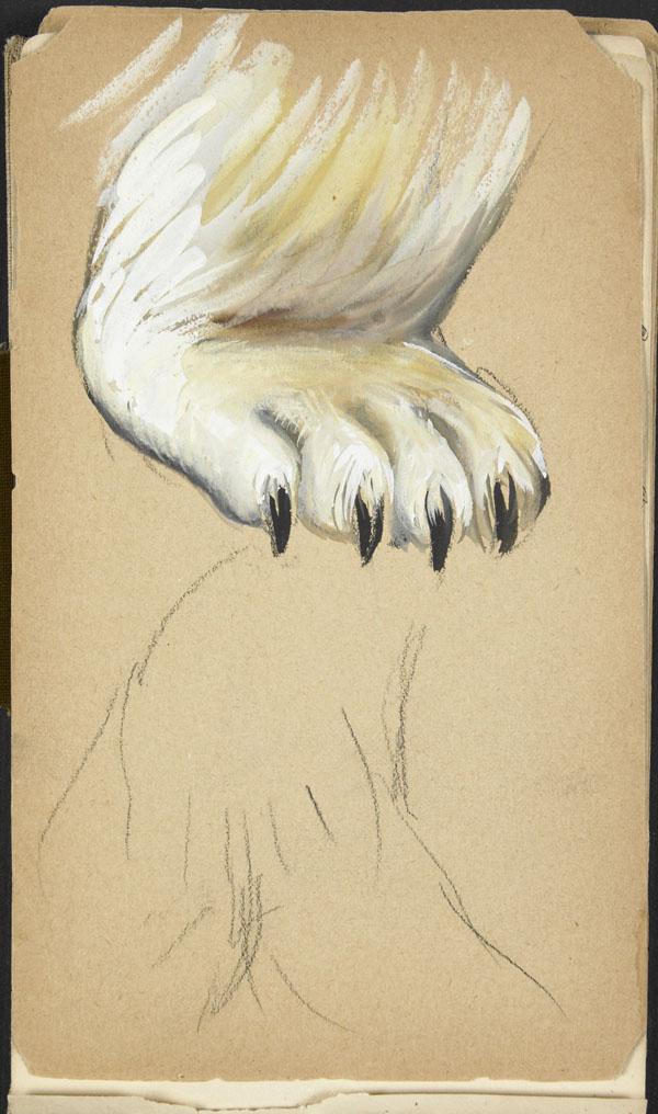 Polar bear paw, London Zoo