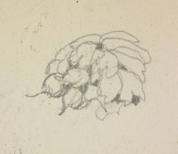 Studies from the turnip harvest, Belgium (detail of a bunch of turnips)