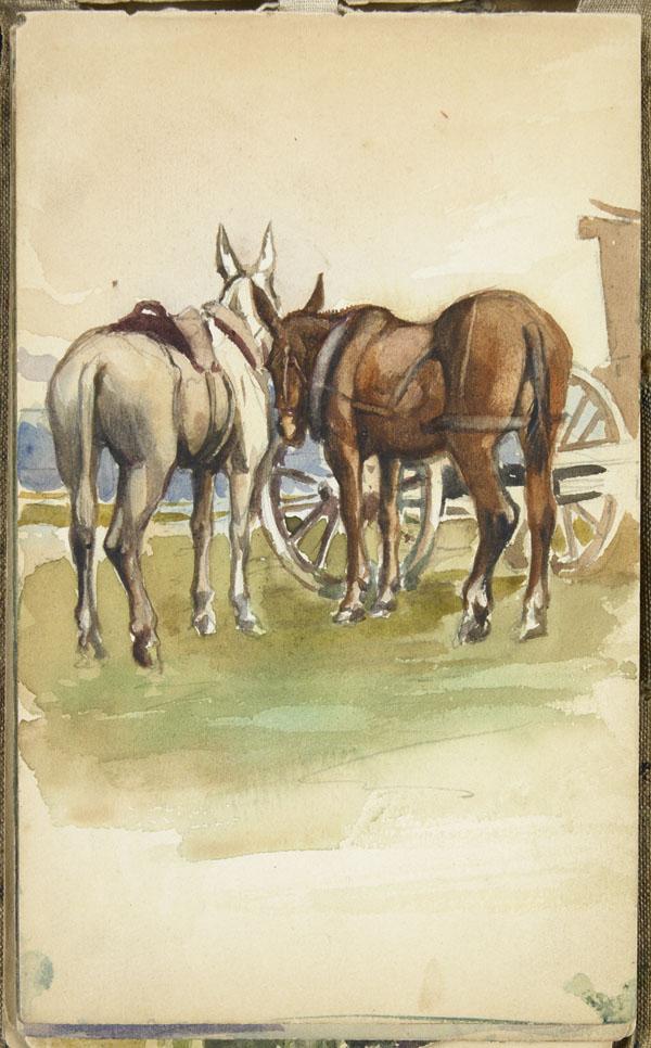 Mules attelées, Pas-de-Calais