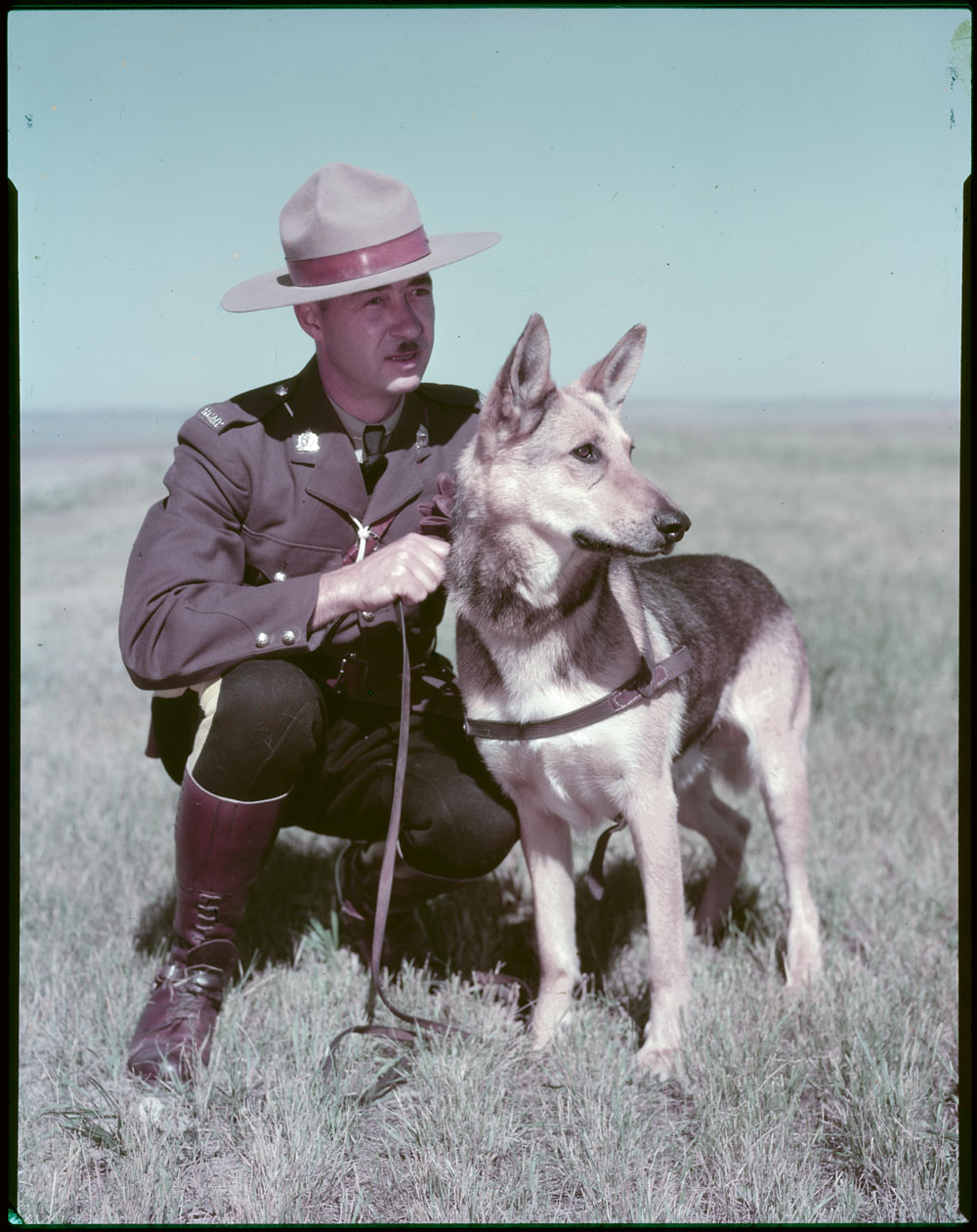 Colour photograph of an officer posing with a dog in a field.