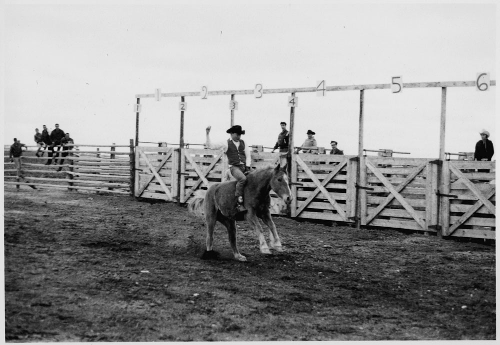 Aboriginal man on a horse in front of starting gates, Community Health Worker Training Program, North Battleford. (item 1)