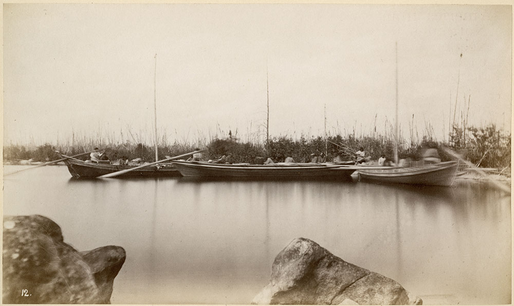Black and white photograph of three long wooden boats on the water in front of a line of bushes.